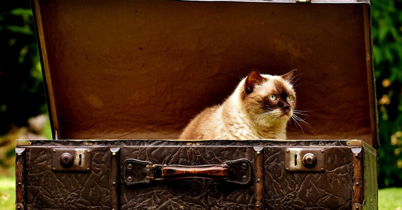 Antreprenori, luați-vă bagajele și cărați-vă!