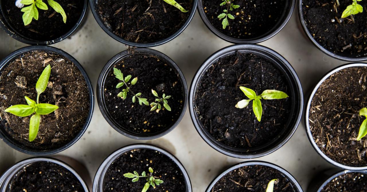 Fondatorii SeedBlink: Este benefic să avem un ecosistem funcțional și stabil