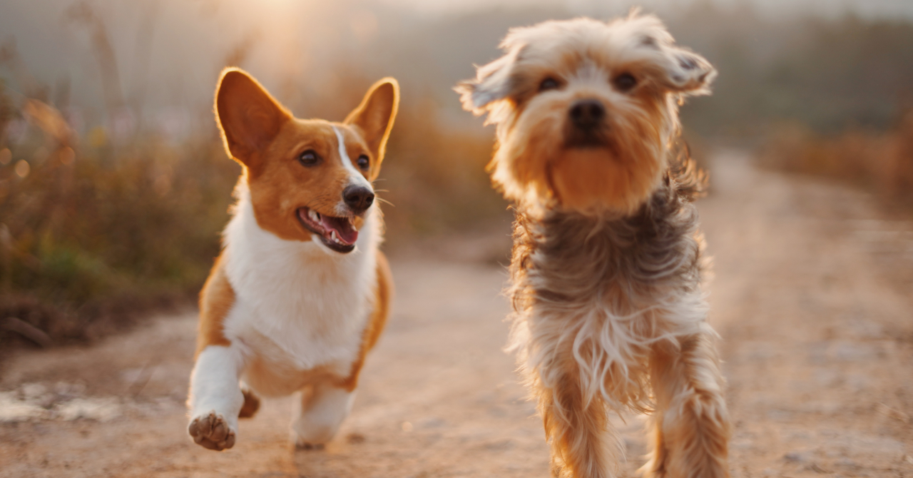Startup-ul veterinar Digitail, fondat de români, investiție din Suedia