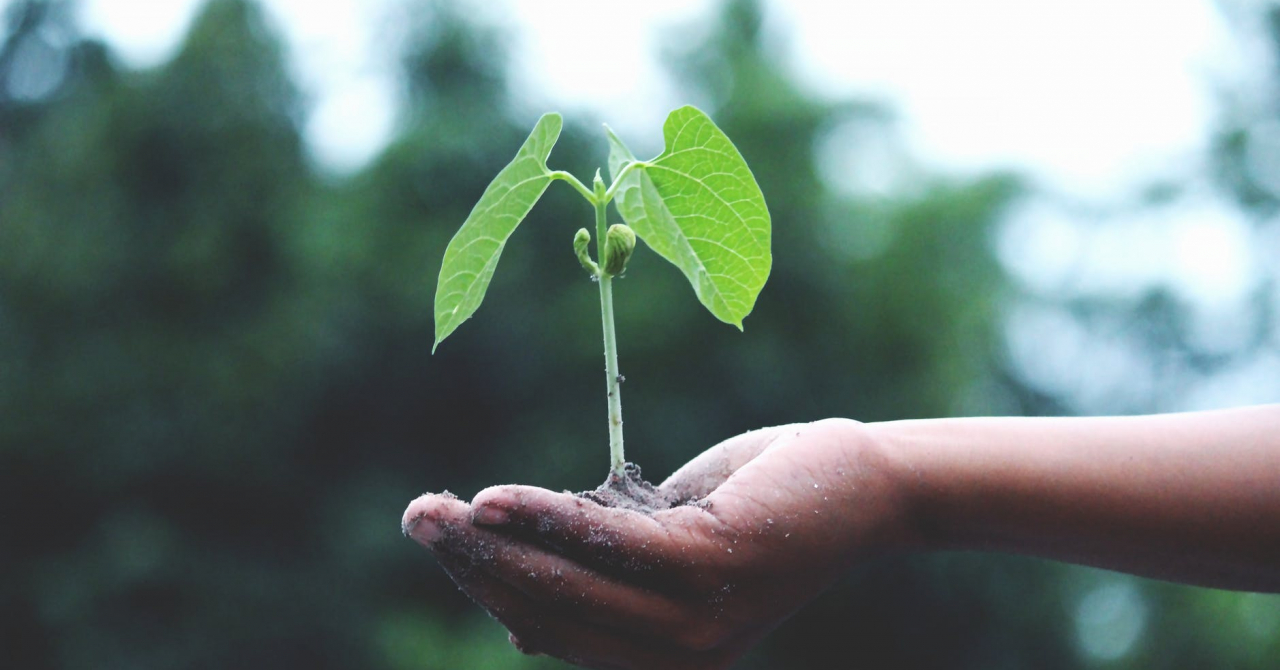 A lăsat banca pentru a cultiva legume proaspete în Banat