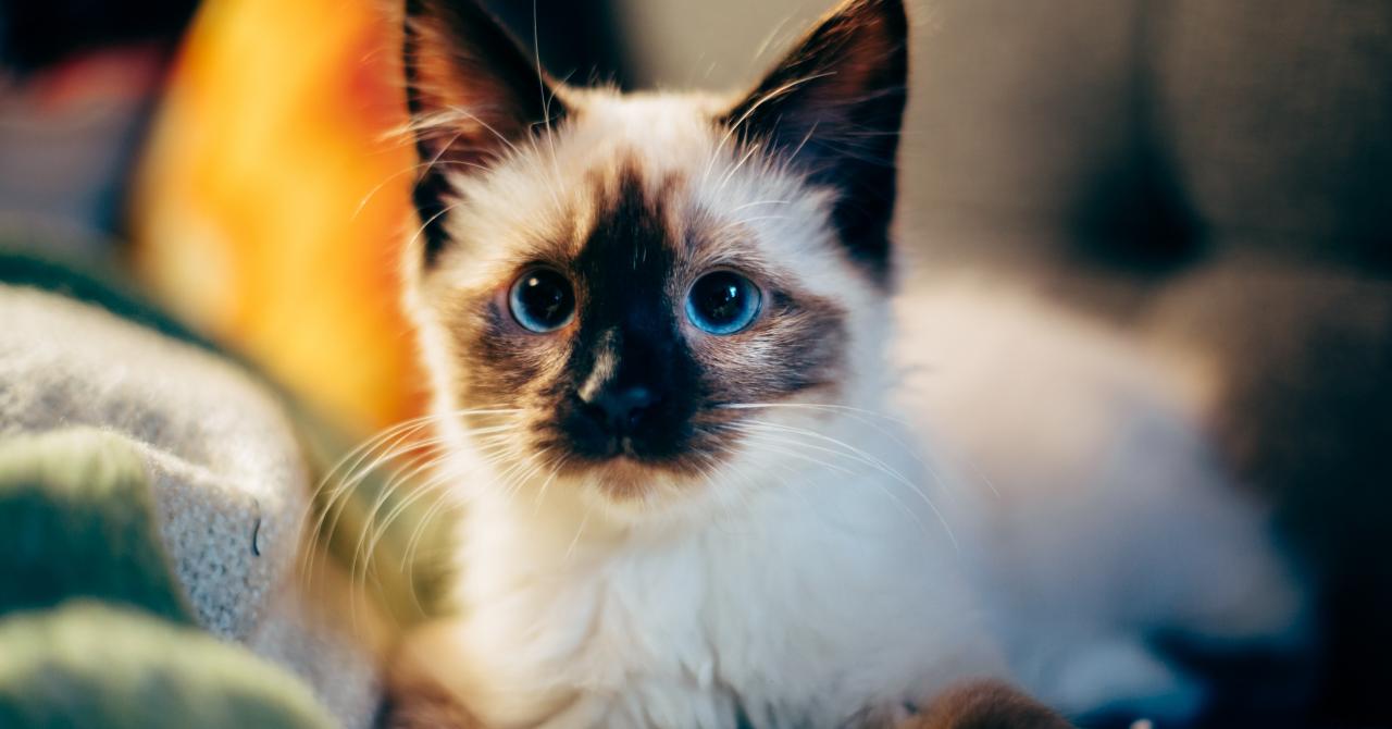 Tânăra care a făcut o afacere din dragostea ei pentru animale