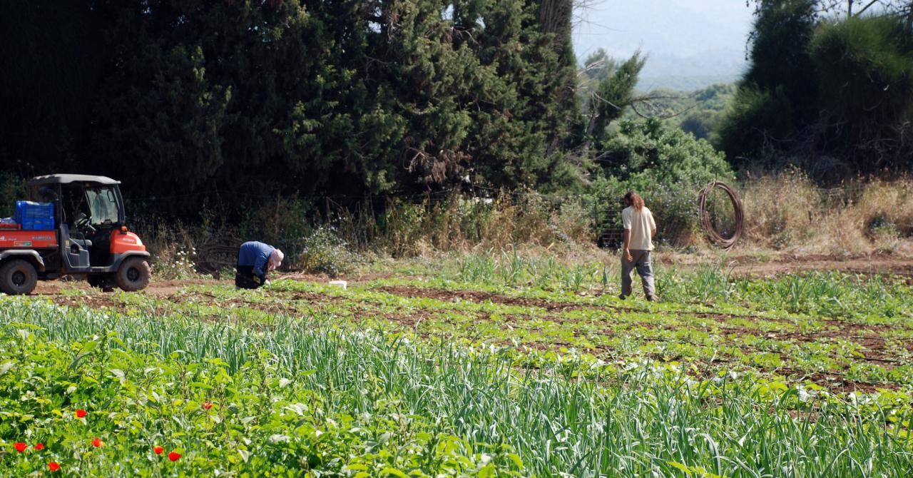 Accelerator pentru startup-urile tech din agricultură