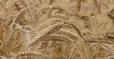 Estonienii aduc tehnologia de administrat ferme în România