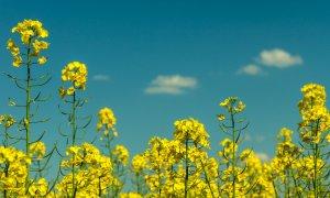 De la joaca prin livezi și vii, la o afacere durabilă în agricultură