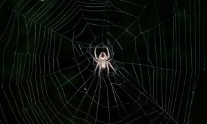 Cele mai mișto site-uri de pe Dark Web pe care nu le găsești în Google