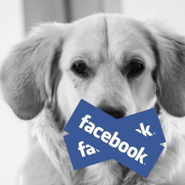 """Cum și de ce ai luat """"zucc"""": Facebook explică cum se face """"cenzura"""""""