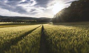 OTP, soluții de finanțare pentru agricultori: care sunt beneficiile