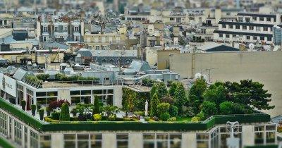 Kaufland dă 130.000 EUR pentru grădini sau ferme urbane în România
