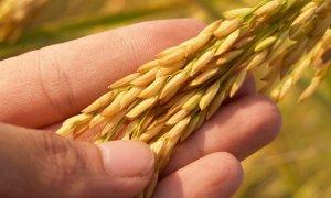 Agricultura românească: ne-am făcut-o cu mâna noastră și ne plângem ca-n Miorița