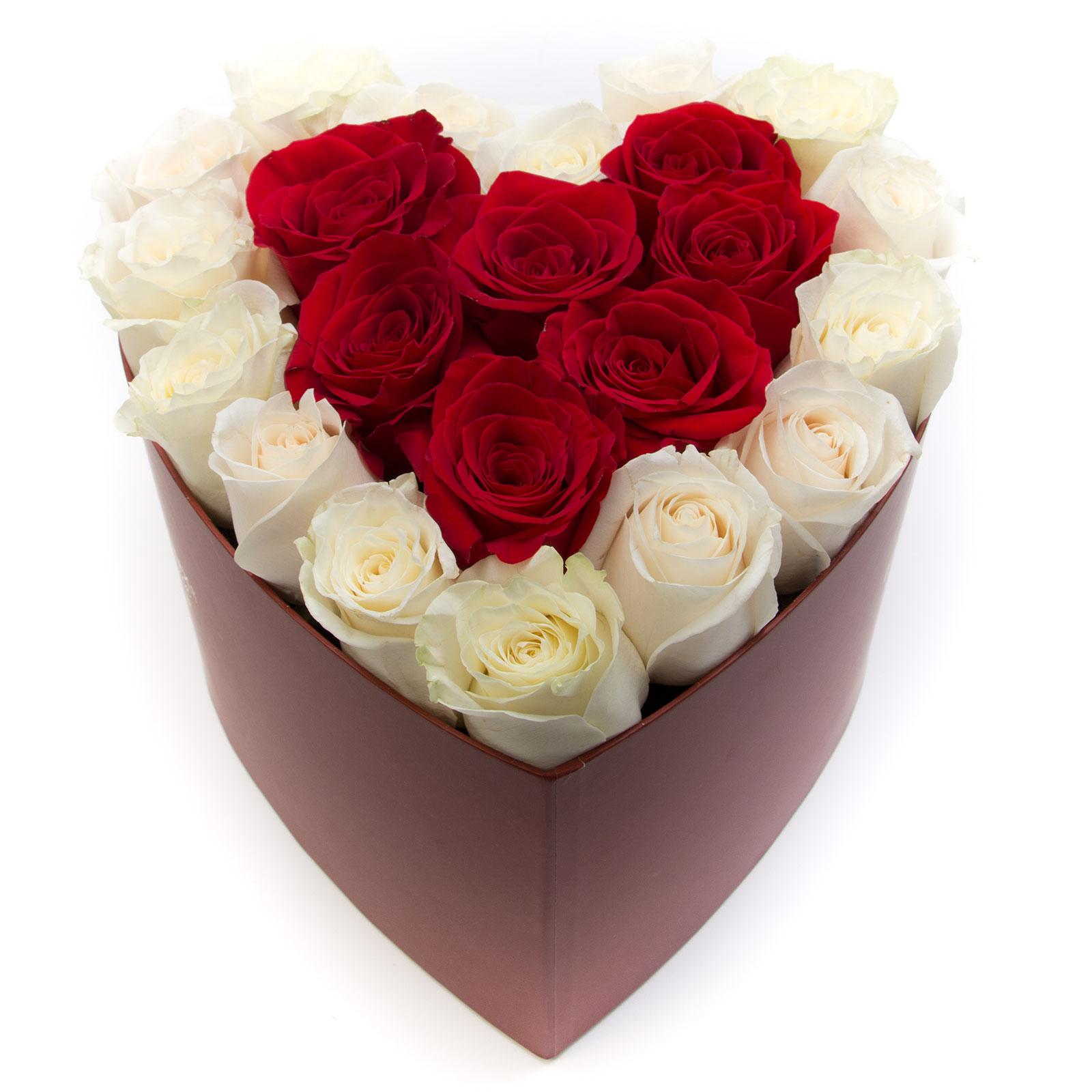 floridelux Cutie trandafiri