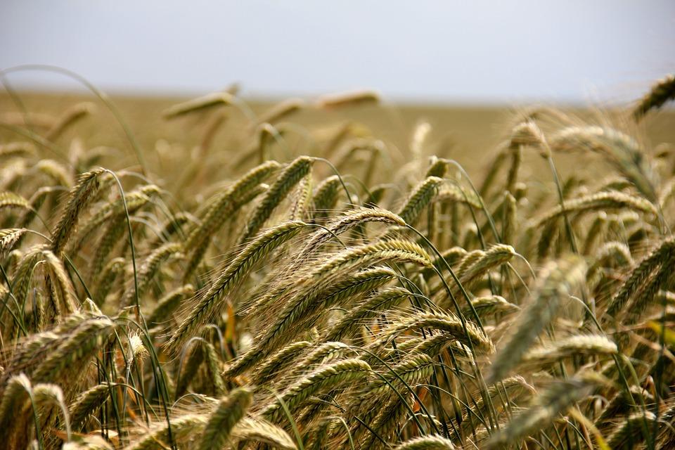 ferma cultura agricultura startup agritech