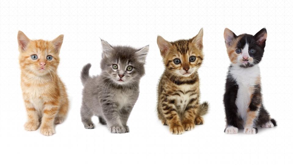 uber pisici campanie uberkittensjpg